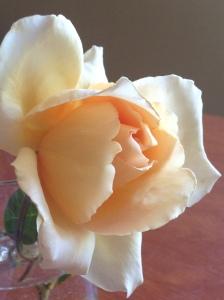 christmas rose (4)